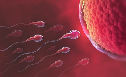 Infertility is the Inability to Conceive a Child